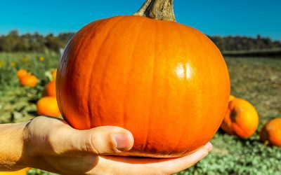 Love Pumpkin? Your Smile Does Too
